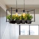2 Lights Rectangle Island Light Industrial Black Metal LED Plant Hanging Lamp for Restaurant