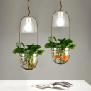 Clear Glass Plant Pot Pendant Lighting Rustic 1 Bulb Living Room Hanging Lamp with Oval Frame in Gold